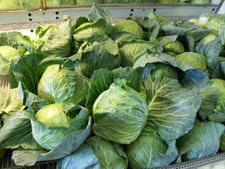 Ritter Farms Cabbage