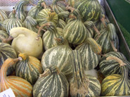 Ritter Farms Winter Squash