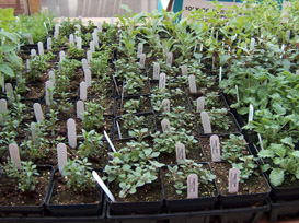 Ritter Farms Herbs